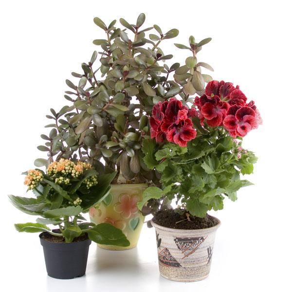 Topfpflanzen for Wasserpflanzen ikea